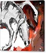 Crazy Horse 7 Acrylic Print