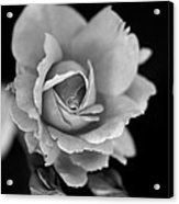 Creatively Colorless Acrylic Print
