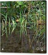 Creek Grass Acrylic Print
