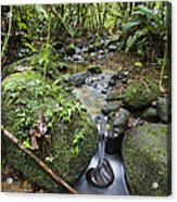 Creek In Mountain Rainforest Costa Rica Acrylic Print