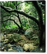 Creek In Woods Acrylic Print by Kathy Yates