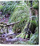 Creek Running Through The Forest Acrylic Print