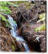 Creeks Fall Acrylic Print