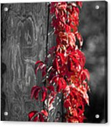 Creeper On Pole Desaturated Acrylic Print