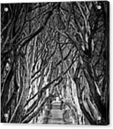 Creepy Dark Hedges Acrylic Print