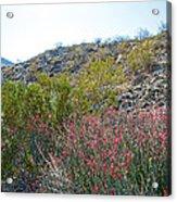 Creosote And Chuparosa On Henderson Trail In Santa Rosa-san Jacinto Nmon-ca Acrylic Print
