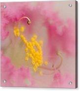 Crepe Myrtle II Acrylic Print