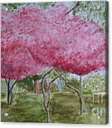 Crepe Myrtles Acrylic Print by Katie Spicuzza