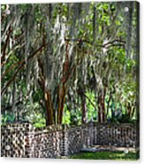 Crepe Myrtles Of Middleton Place Acrylic Print