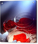 Crime Lab Acrylic Print by Olivier Le Queinec