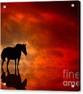 Crimson Acrylic Print