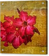 Crimson Floral Textured Acrylic Print