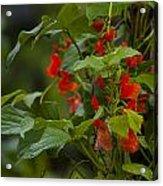 Crimson Flowers Acrylic Print