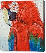 Crimson Macaw Acrylic Print