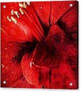 Crimson  Acrylic Print by Natalya Karavay