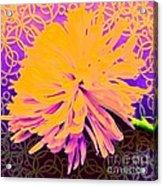 Crisantemo Dorado Acrylic Print