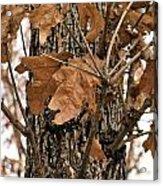 Crispy Leaves Acrylic Print