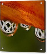 Criss Cross Water Drop Acrylic Print