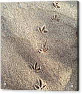 Critter Tracks In The Sand Acrylic Print