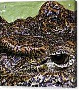 Crocodile Eye Acrylic Print