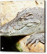 Crocodile Fractal Acrylic Print