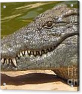 crocodile of the Nile Acrylic Print
