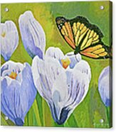 Crocus And Monarch Butterfly Acrylic Print