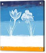 Crocus Flower Acrylic Print