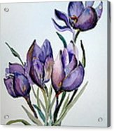 Crocus In April Acrylic Print by Mindy Newman