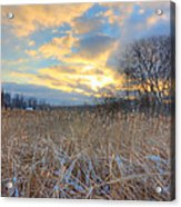 Crooked Lake Willows Acrylic Print by Jenny Ellen Photography
