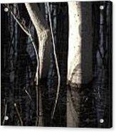 Crooked Stick Acrylic Print