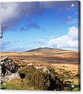 Crooked Tree At Feather Tor, Staple Acrylic Print