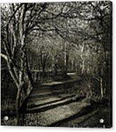 Crooked Tree Enchanted Path Acrylic Print