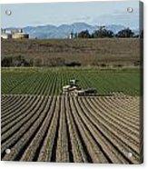 Crops In San Luis Obispo County Acrylic Print