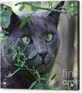 Cross Eyed Cat Acrylic Print