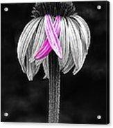 Cross My Heart Acrylic Print