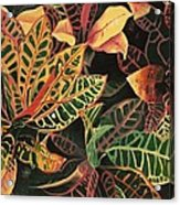 Croton Leaves Acrylic Print