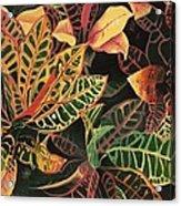 Croton Leaves Acrylic Print