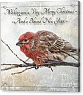 Crouching Finch Christmas Greeting Card Acrylic Print