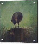 Crow 12 Acrylic Print