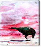Crow At Dawn Acrylic Print