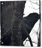 Crow Eye Acrylic Print