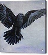 Crow Flight Acrylic Print