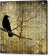 Crow In Damask Acrylic Print