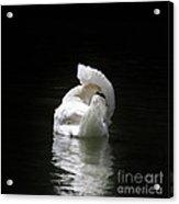 Crown Of Feathers II Acrylic Print by Lynn Jackson