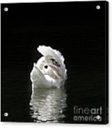 Crown Of Feathers IIi Acrylic Print