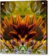 Crowned  Acrylic Print by Omaste Witkowski
