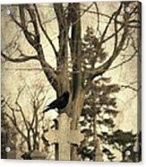 Crow's Cross Acrylic Print