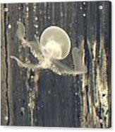 Crstal Jellyfish Acrylic Print