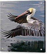 Cruising At Water Level 2 Acrylic Print